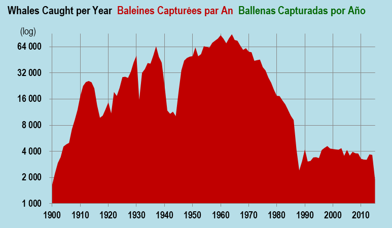 Whales Caught, by year, including corrected USSR totals; source has data by species Baleines.png