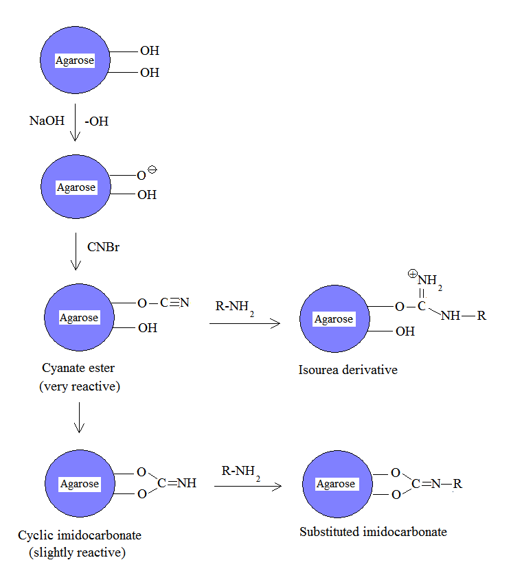 Cnbr Activated Matrices Reaction How To Reduce Size Of