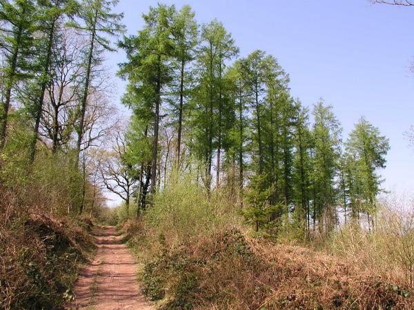 Canaston Wood - geograph.org.uk - 243958