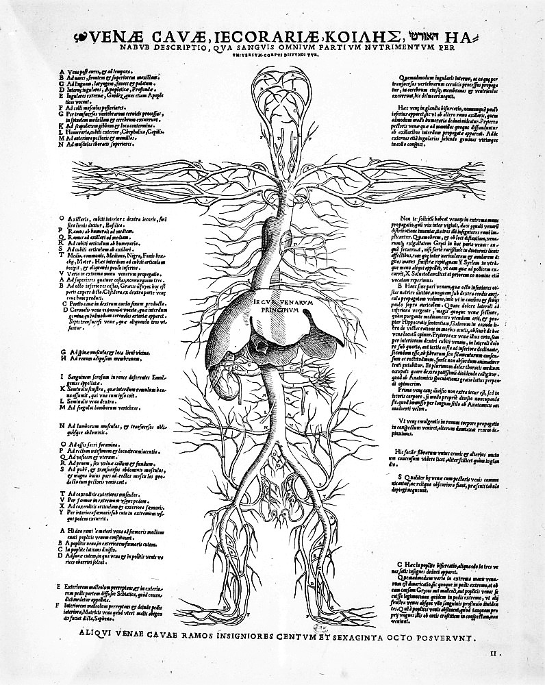 vascularisation - d u00e9finition