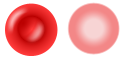 Erythrocyte.png