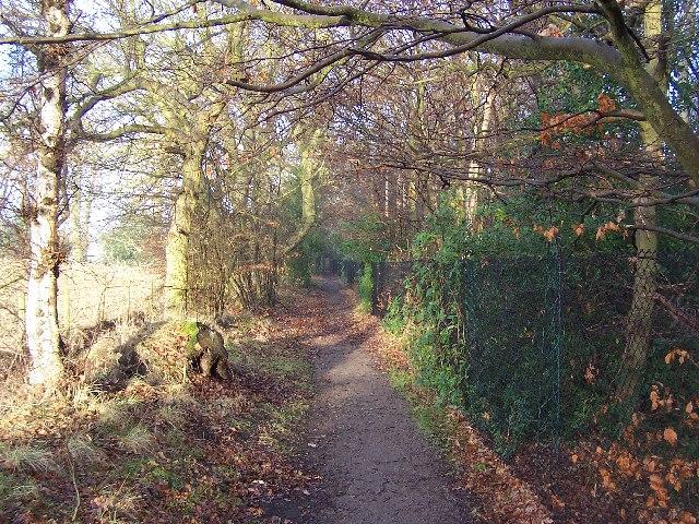 Harrogate Ringway Path behind Harlow Carr Gardens - geograph.org.uk - 100898