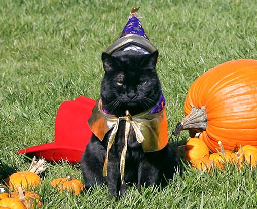 no comments - Funny Cat Halloween