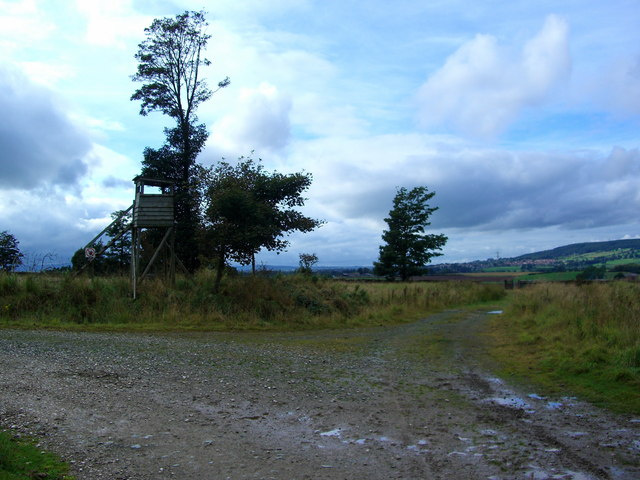 Junction of two forestry roads on the edge of Whinfell Forest - geograph.org.uk - 566788