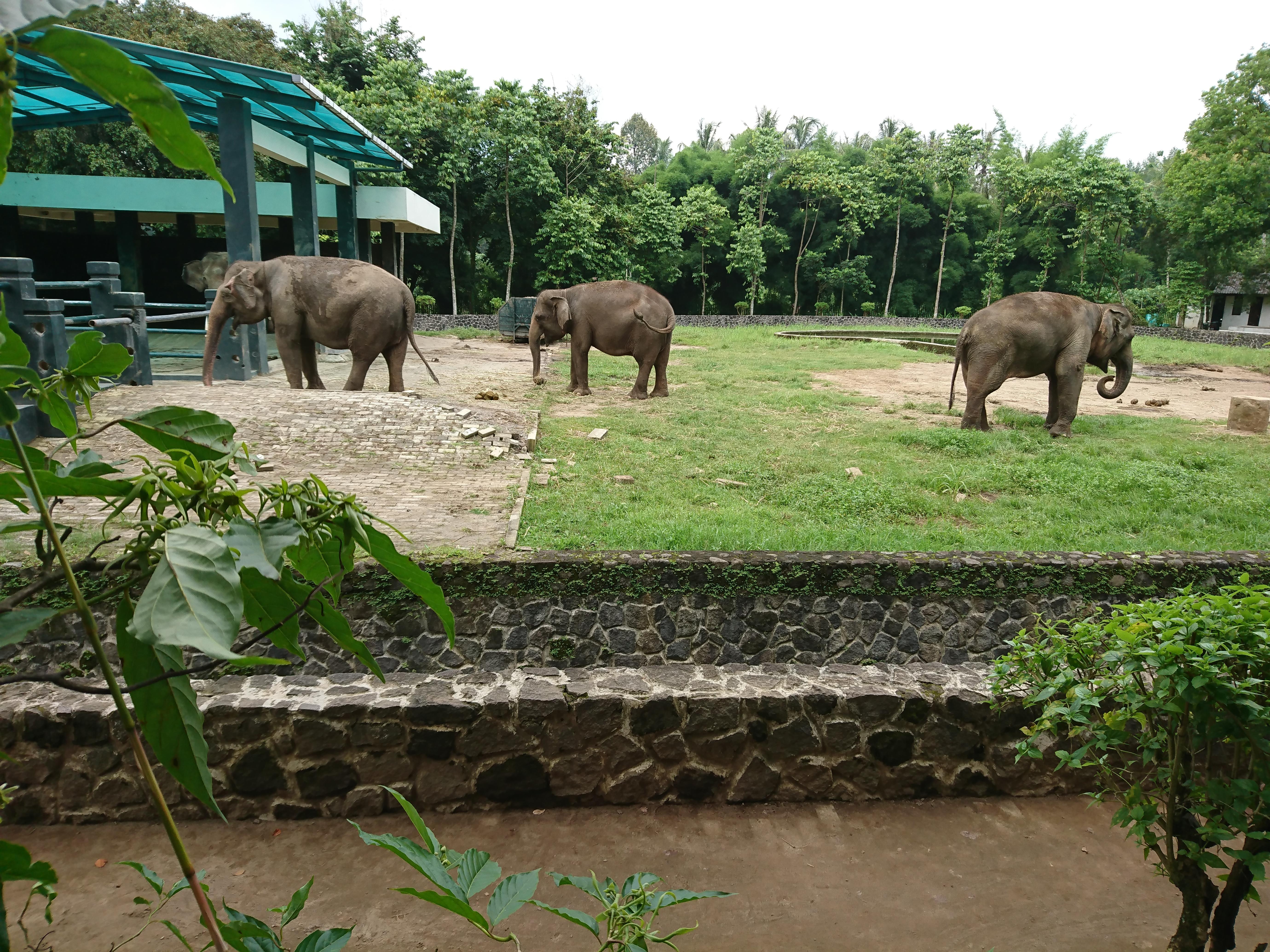 File Kandang Gajah Borobudur Jpg Wikimedia Commons