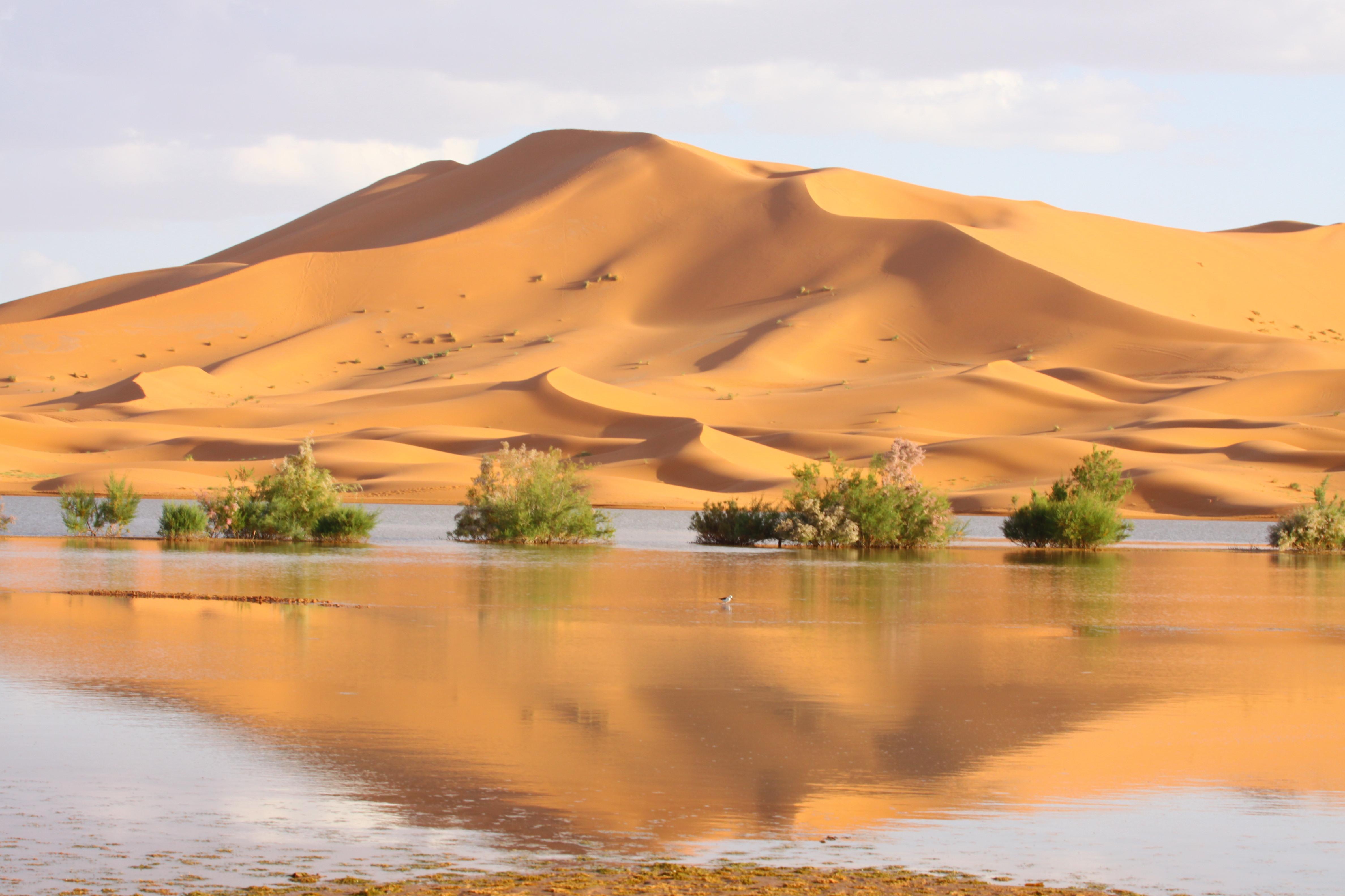Dunes Desert Landscapes