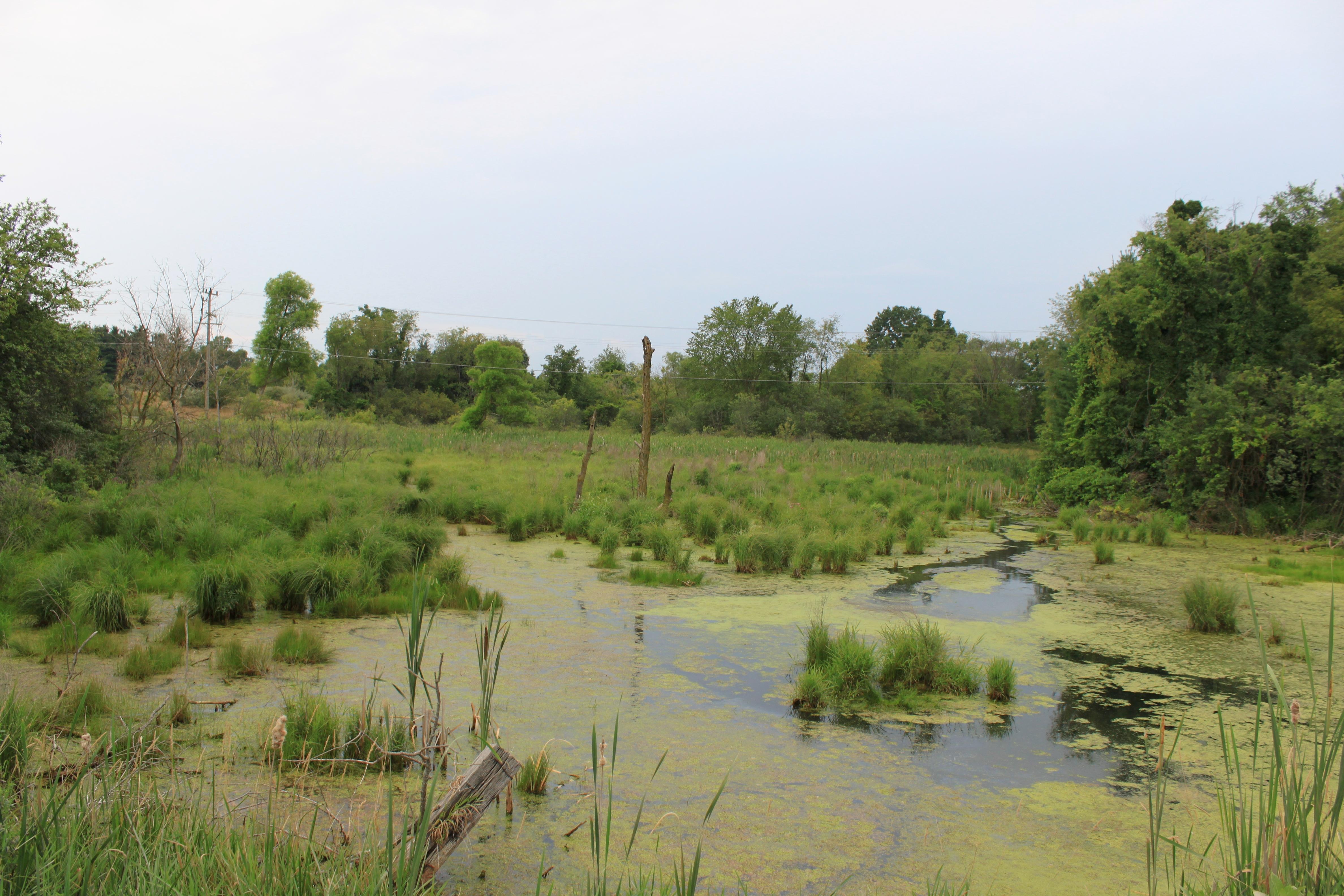 File:Marsh on Crane Road Pittsfield Township Michigan.JPG ...