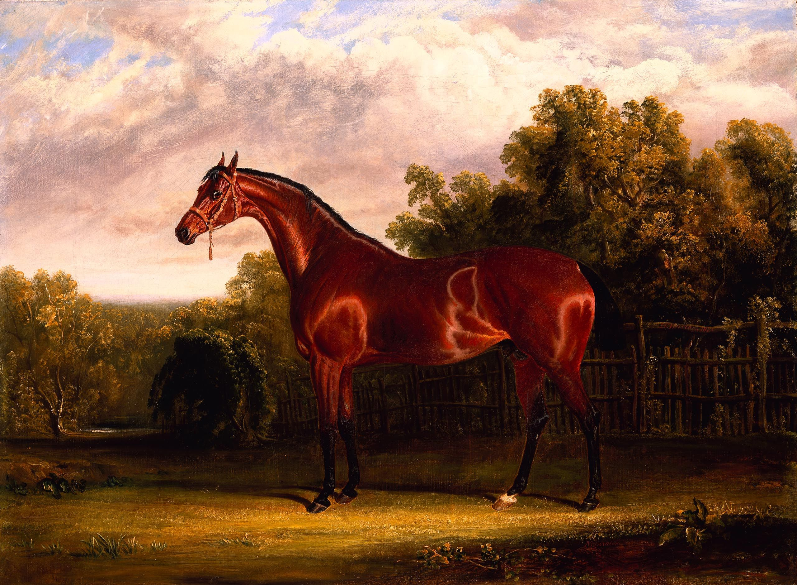 File:Negotiator, a Bay Horse in a Landscape) by John Frederick Herring ...