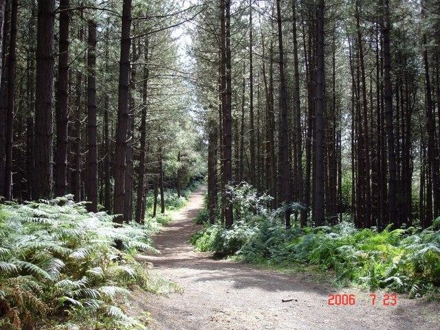 Oakmere - Delamere Forest - geograph.org.uk - 207821