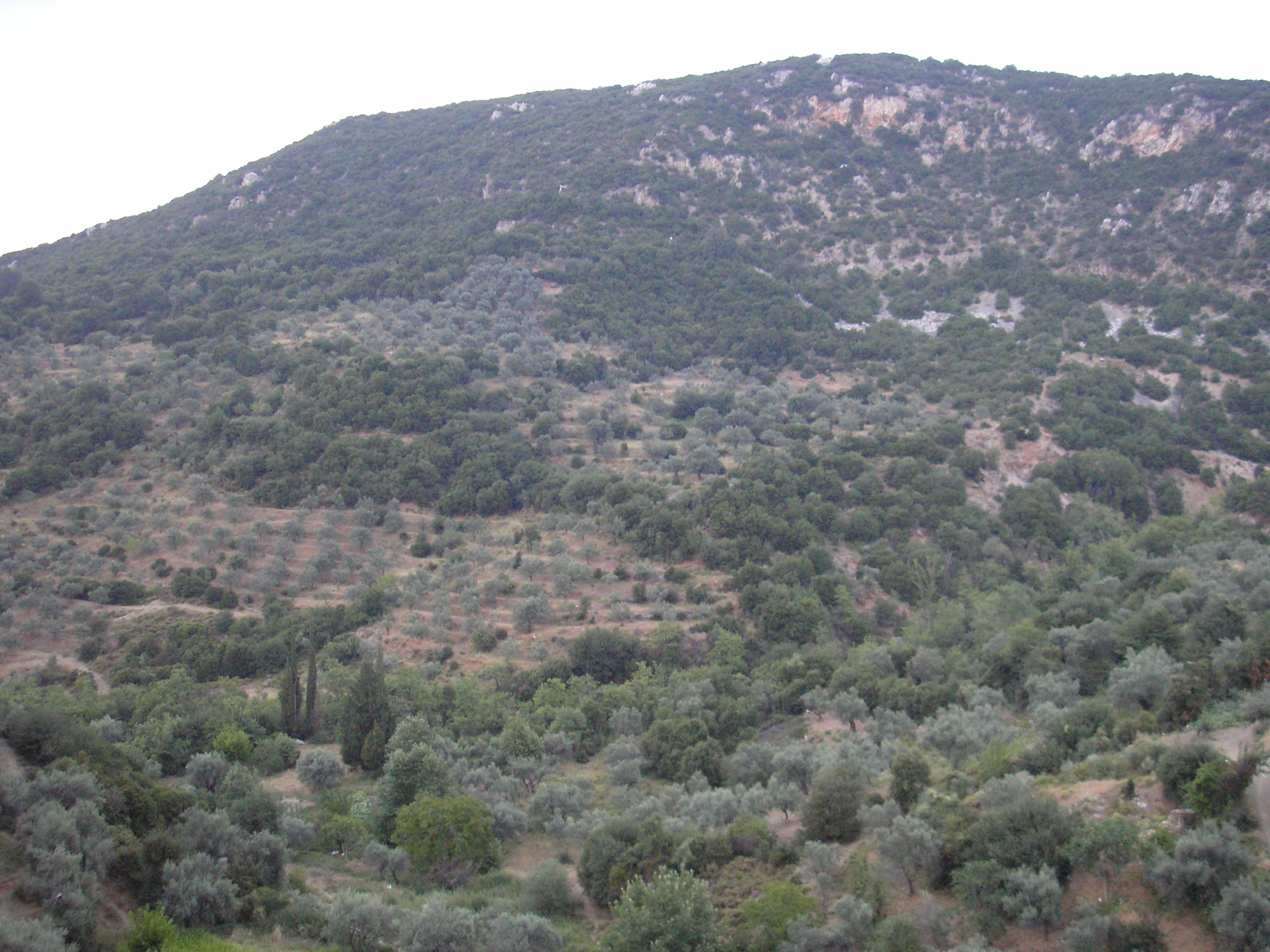 Mountain Of Olive Check Out Mountain Of Olive Cntravel