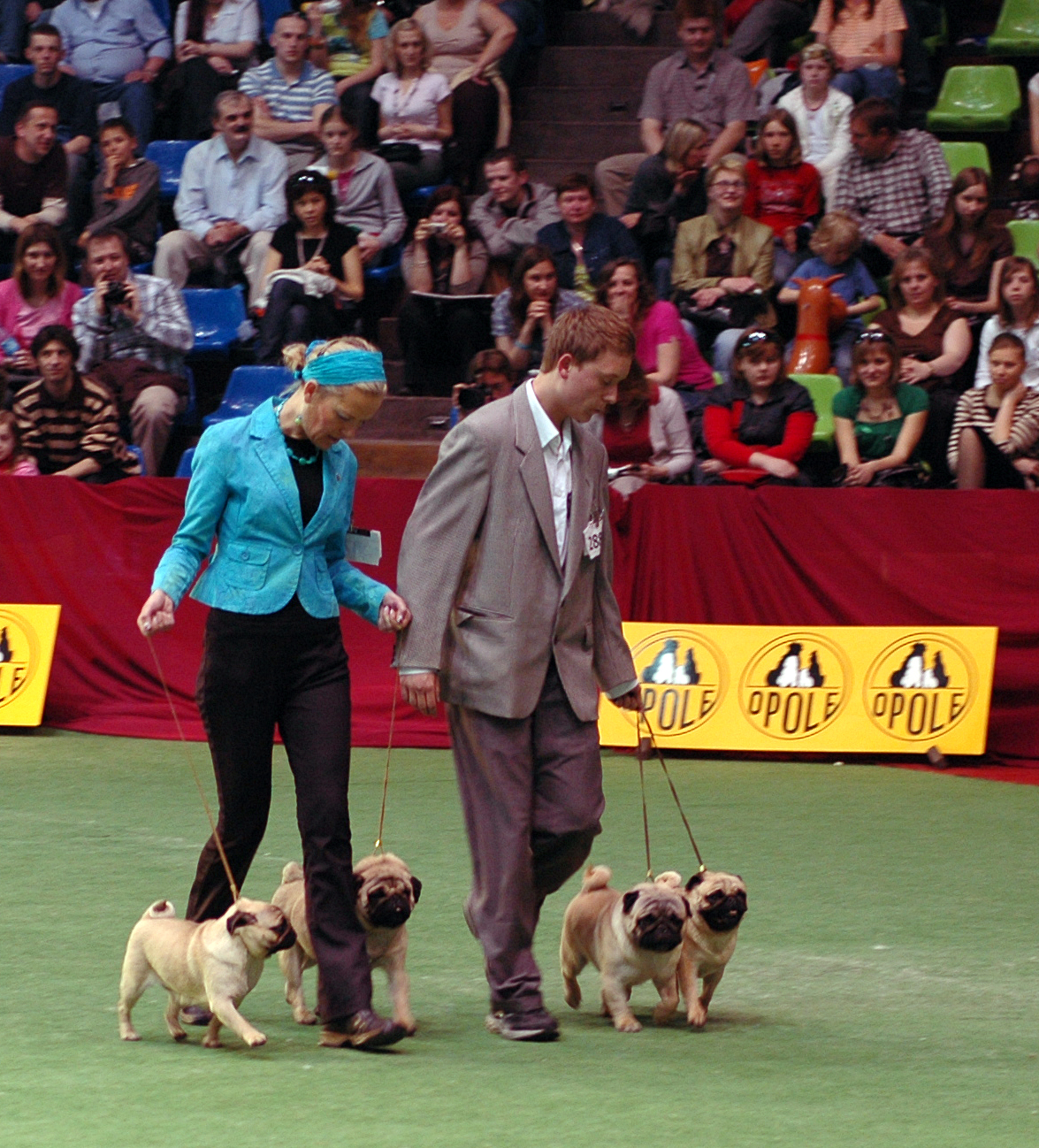 Show Dog Handlers In Yx