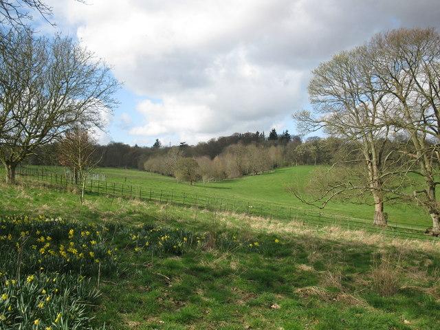 Pheasant Park, Basildon Park - geograph.org.uk - 1226931