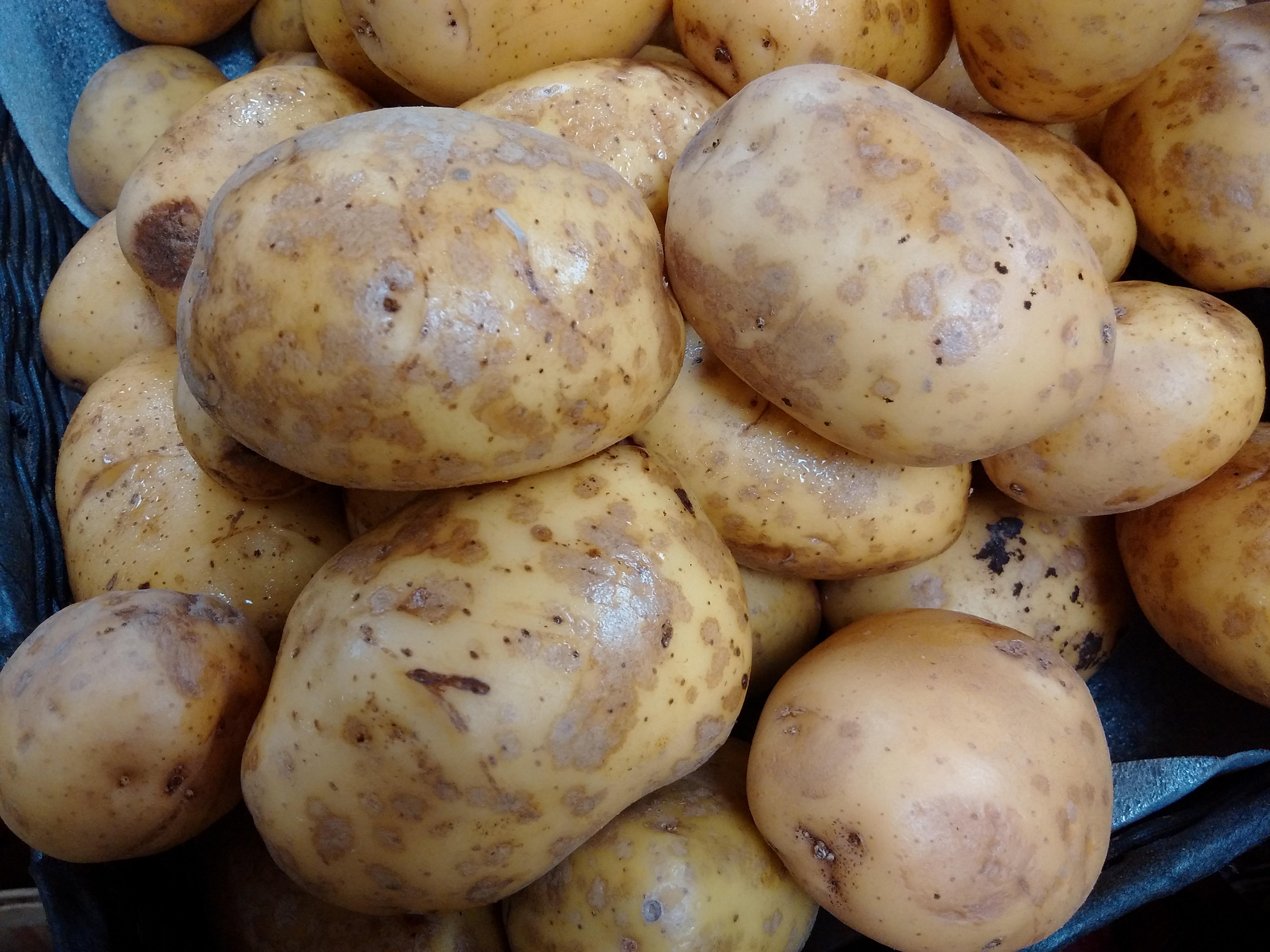 helminthosporium solani burgonya antihelmintikus gyógynövény készítmények