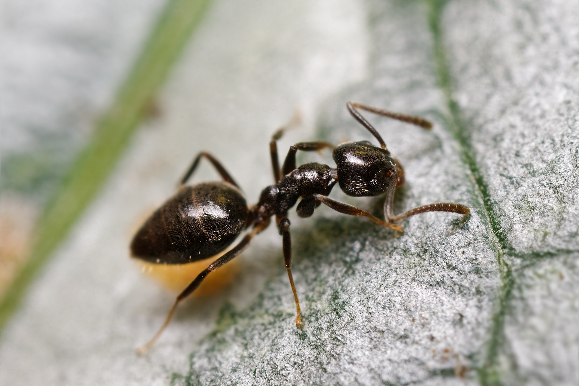 Http Www Ants Interieur Gouv Fr Siv Suivi Des Titres