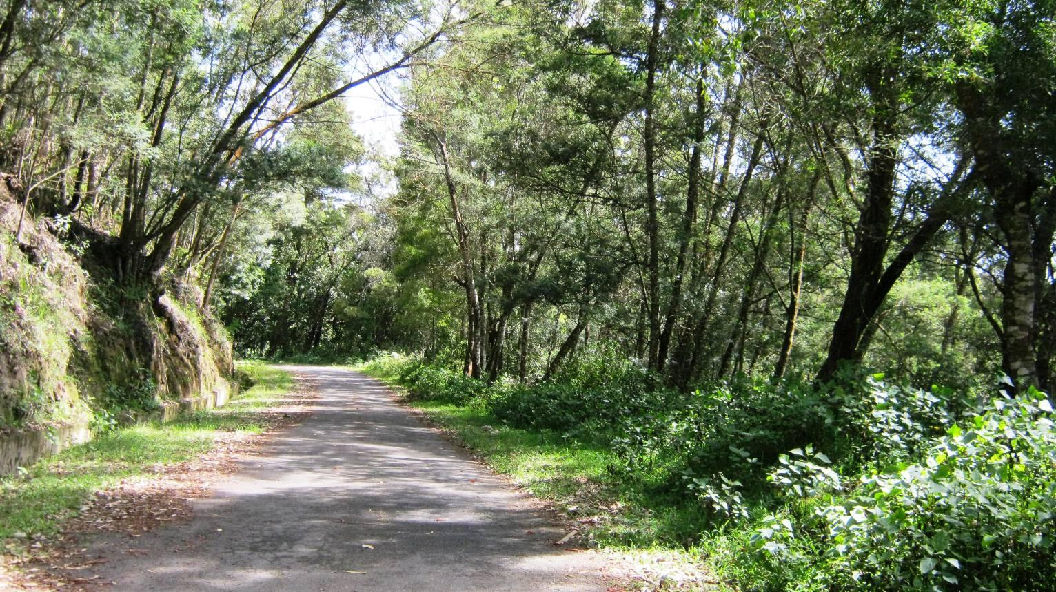 Safari road through Anamudi Shola National Park