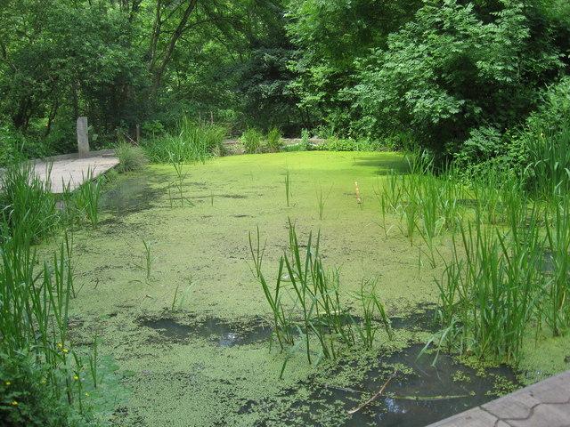 Wildlife Pond at Willsbridge Mill - geograph.org.uk - 1352527