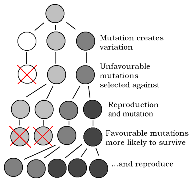 File:643px-Explanation of Evolution v2.1.PNG