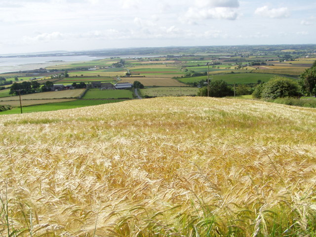 A Golden harvest from Scrabo Tower - geograph.org.uk - 508099