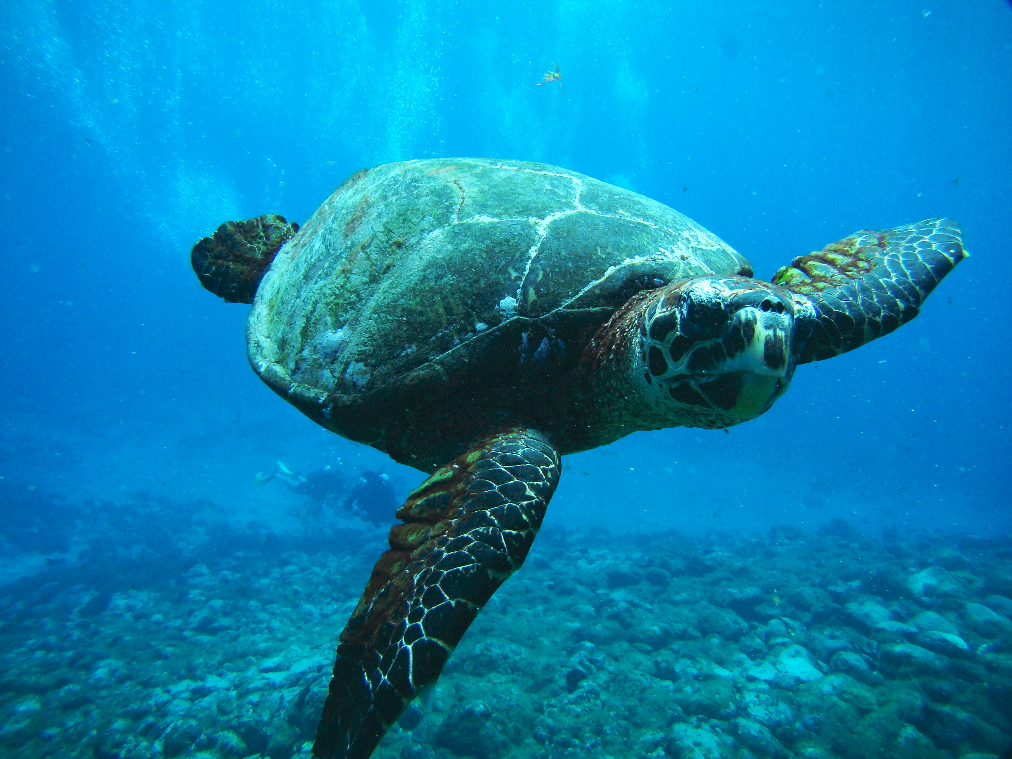 What Food Do Sea Turtles Eat