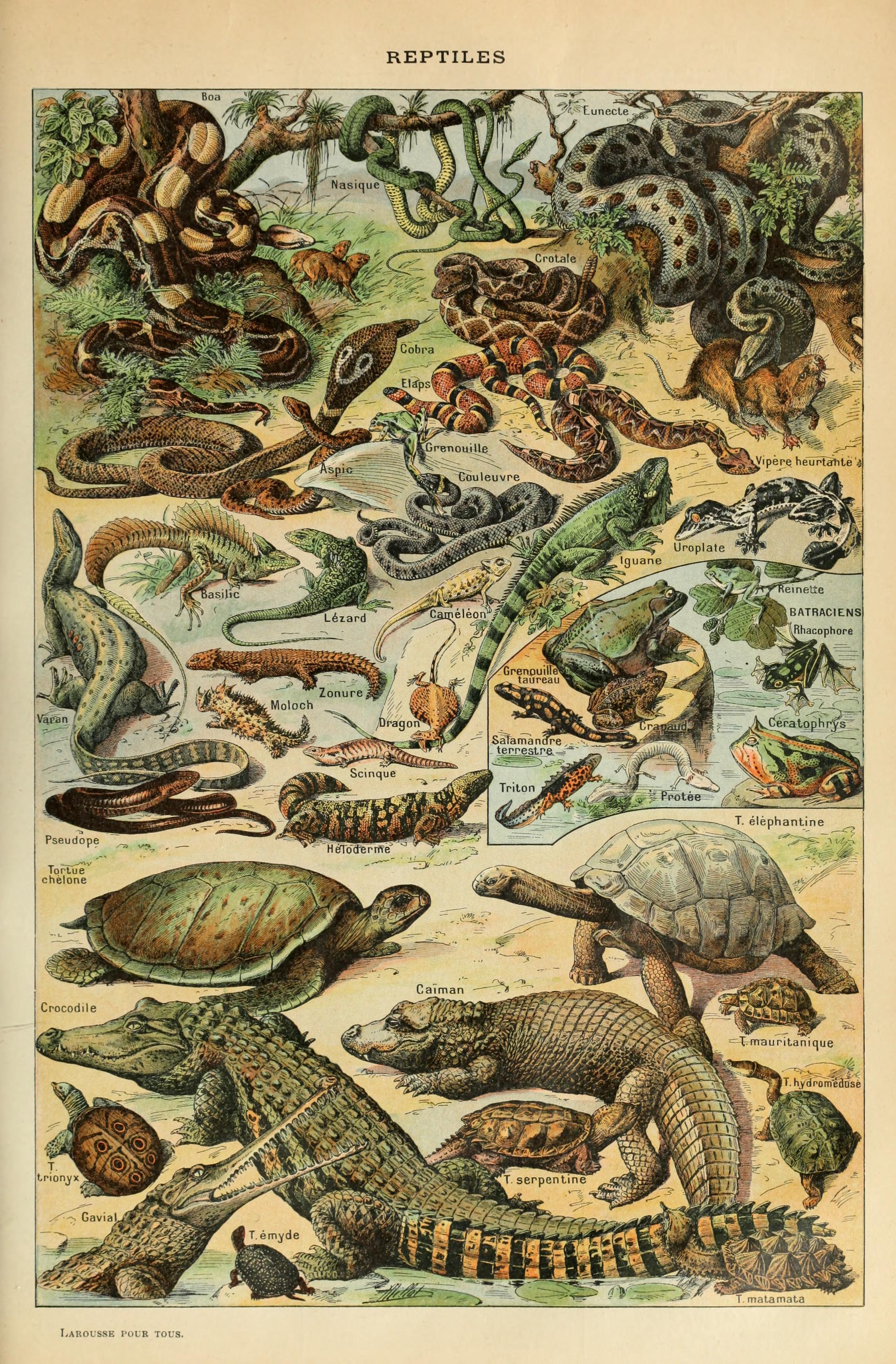 File:Adolphe Millot reptiles-pour tous.jpg - Wikimedia Commons