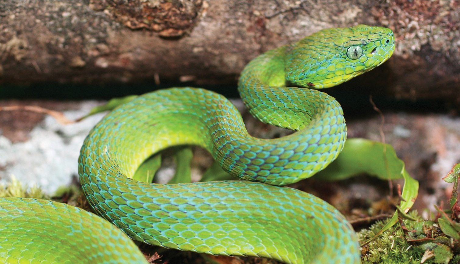 Image Result For Realistic Snake Coloring