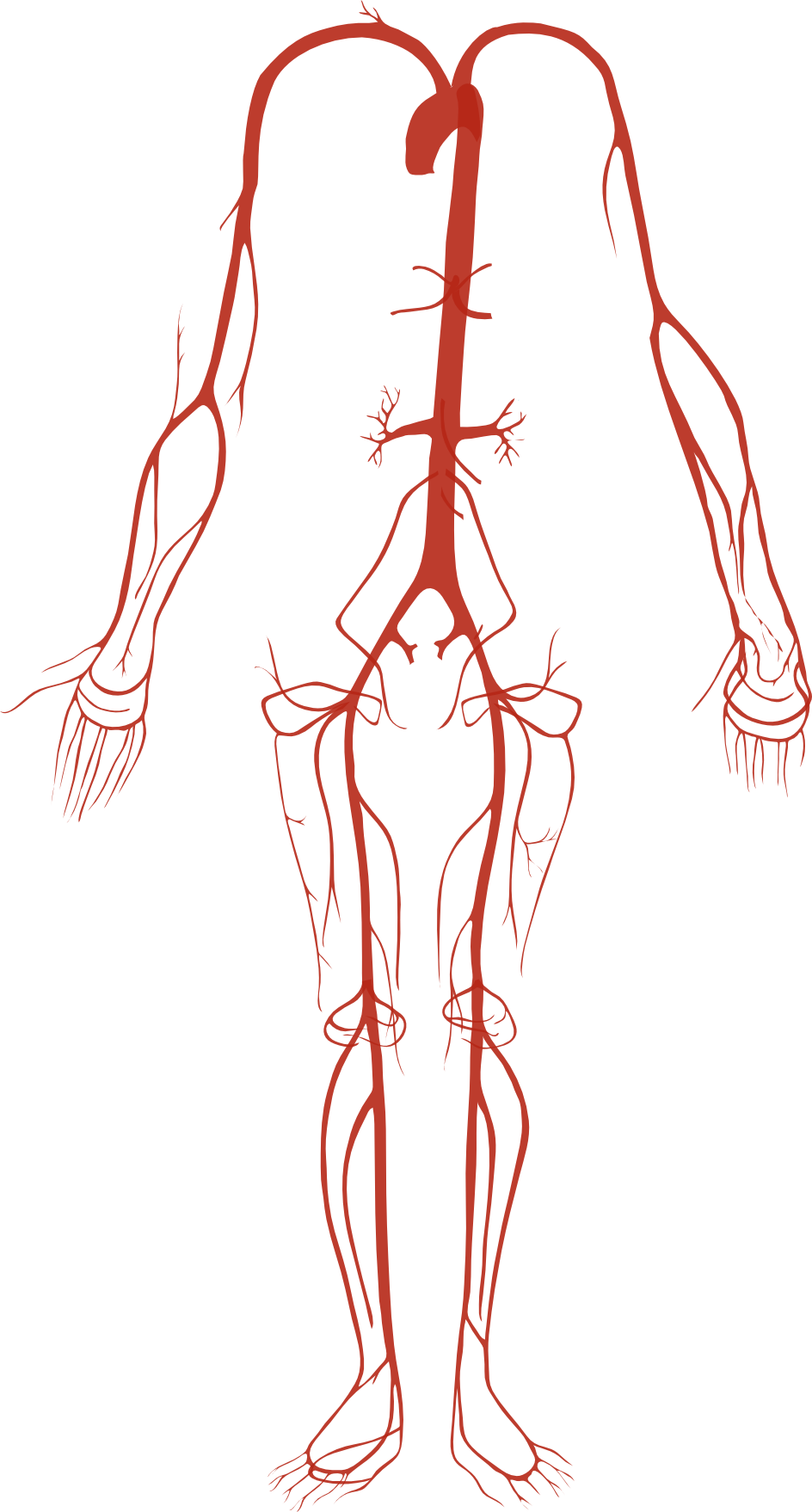 File Arterial System Png