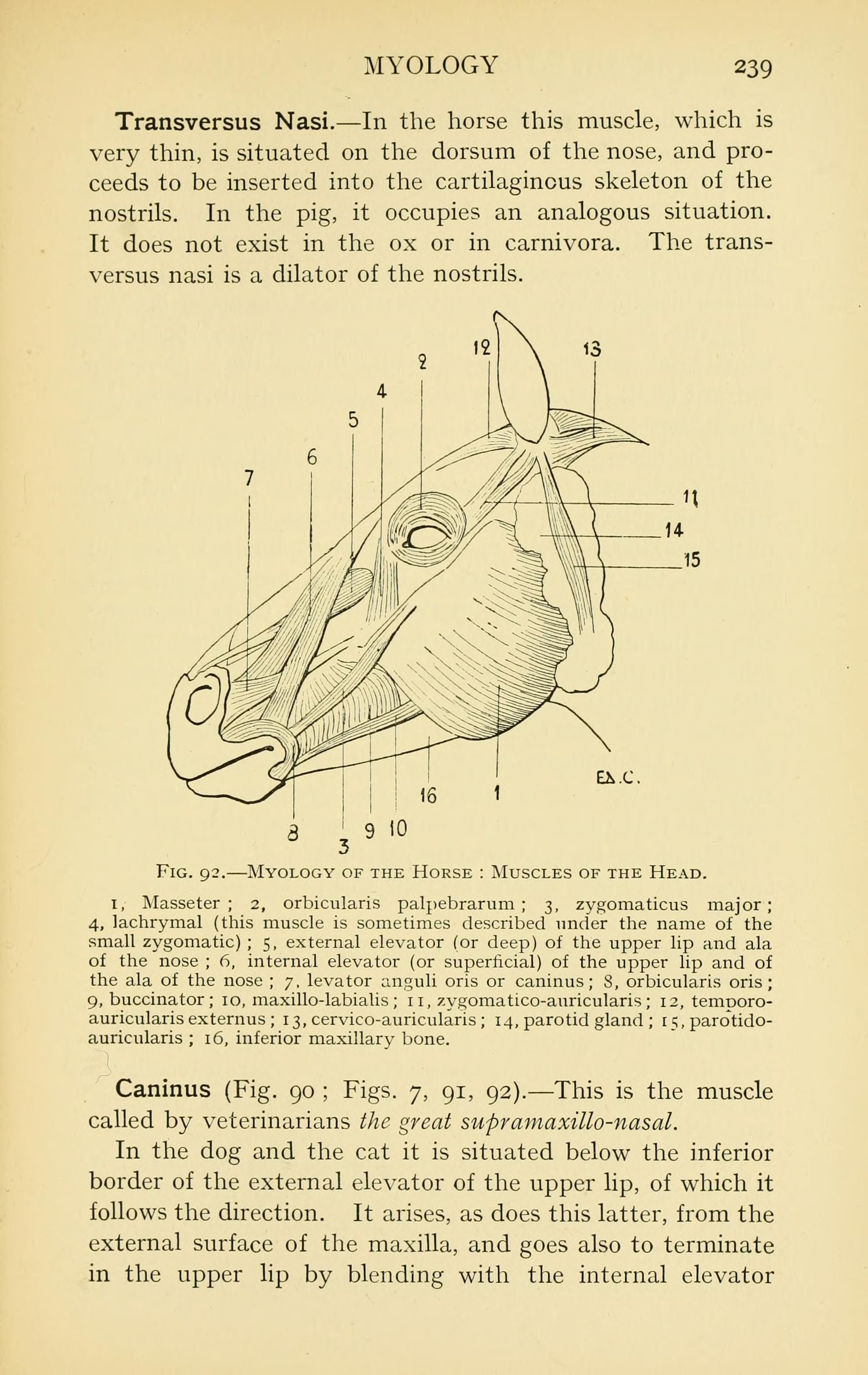 Fantastic Anatomy Of Upper Lip Embellishment - Human Anatomy Images ...