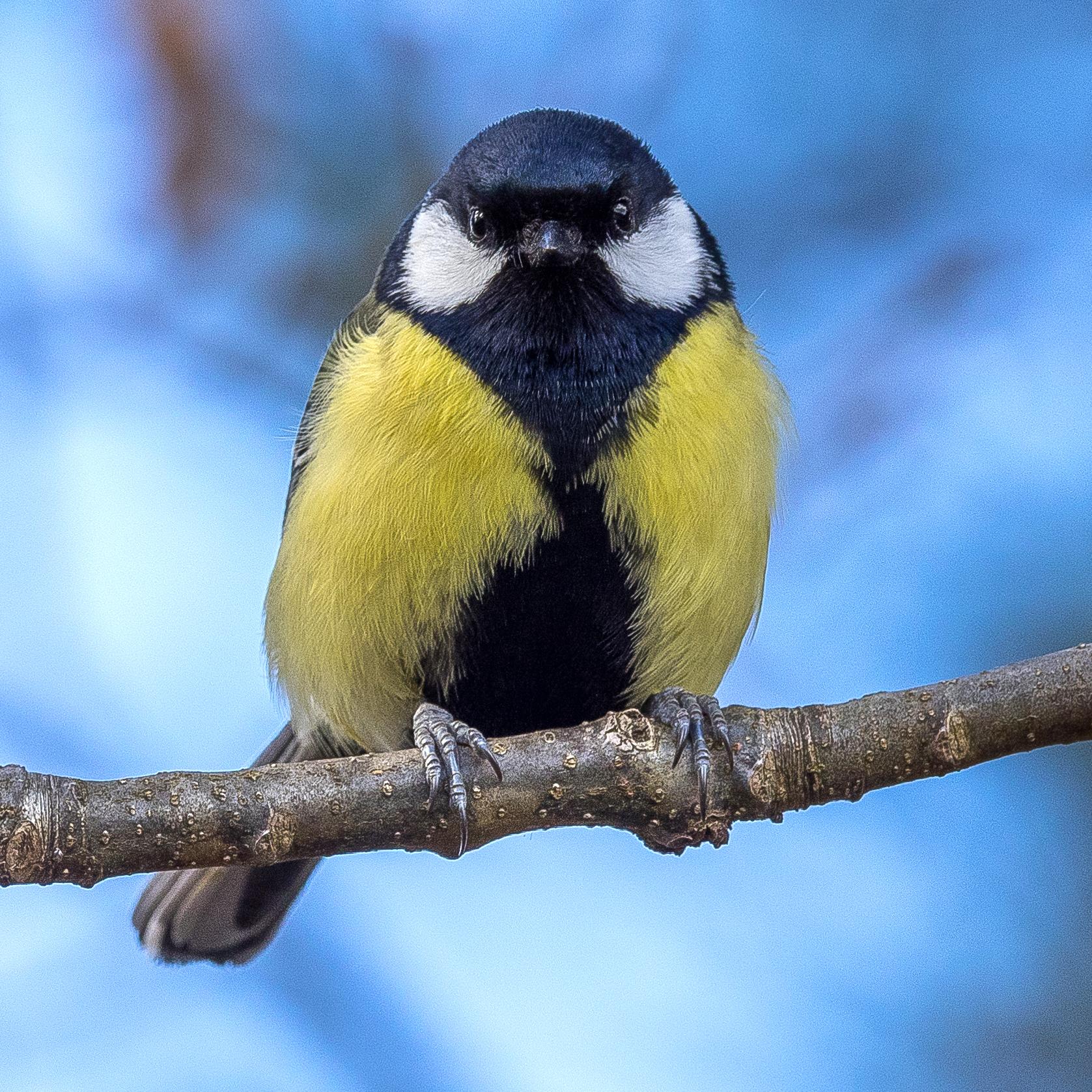 Birds_of_Sweden_2016_37.jpg