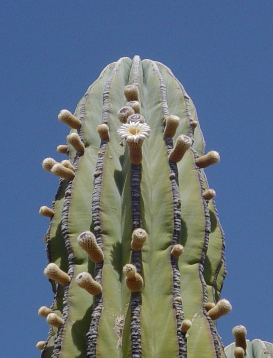 Flora y Frutos del Desierto
