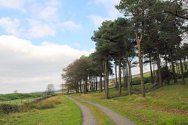 Coniferous woodland on Bretton Moor - geograph.org.uk - 591733