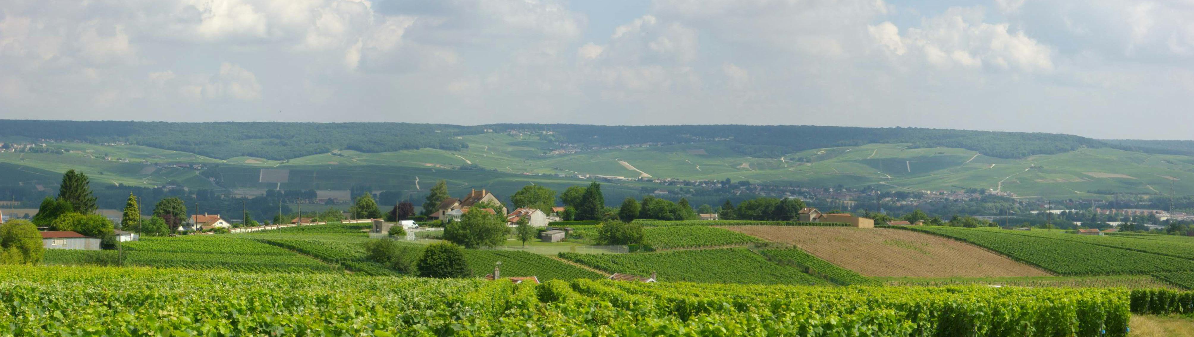 Grande vall e de la marne tomas 39 s wine blog for Champagne marne