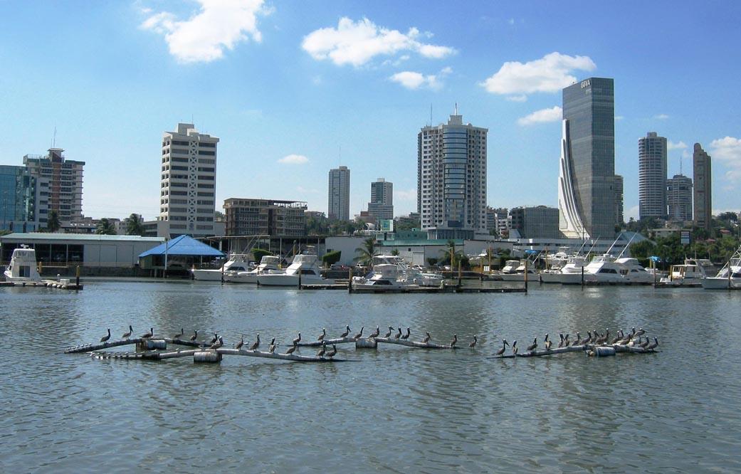 Ciudad de Panamá، مدينة بنما  DirkvdM_panama_pelicans