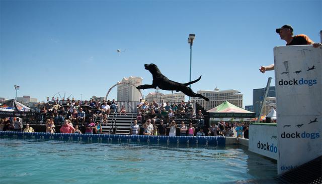 Dock Diving Dogs Uk