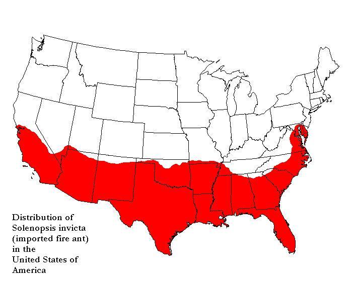 FileFireantmapUSAjpg Wikimedia Commons - Cockroach Us Map