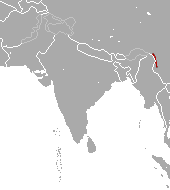 Gaoligong pika species of mammal