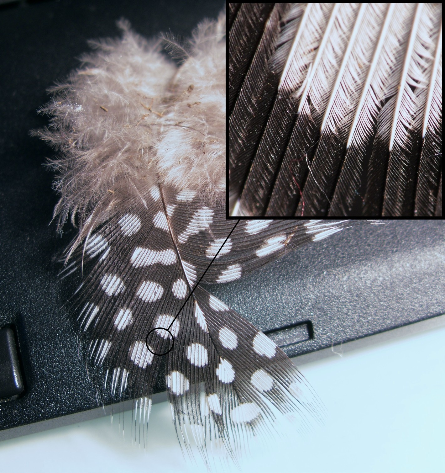 Feathers Photo