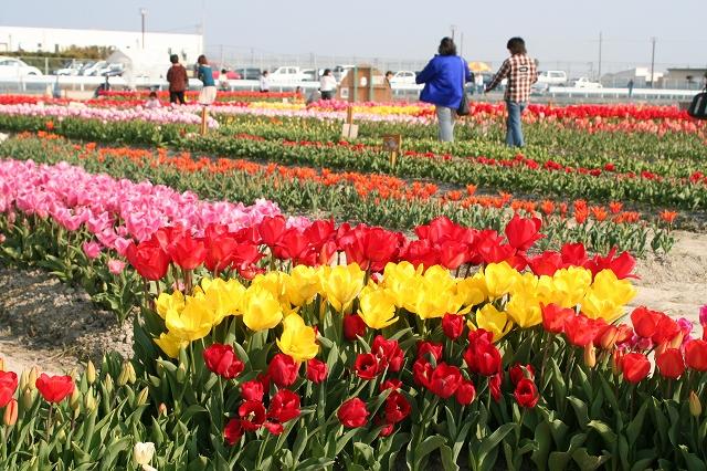 Kitajima, Tokushima - Wikipedia
