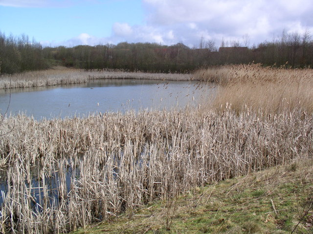Lakes, Great Notley Country Park - geograph.org.uk - 662885