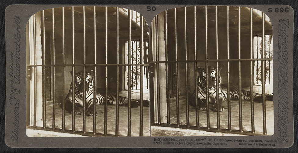 "tereographicphotograph1903,captioned""amousman-eateratalcuttadevoured200men,womenandchildrenbeforecapturendia""refref"