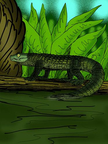 Mekosuchus_inexpectans.JPG
