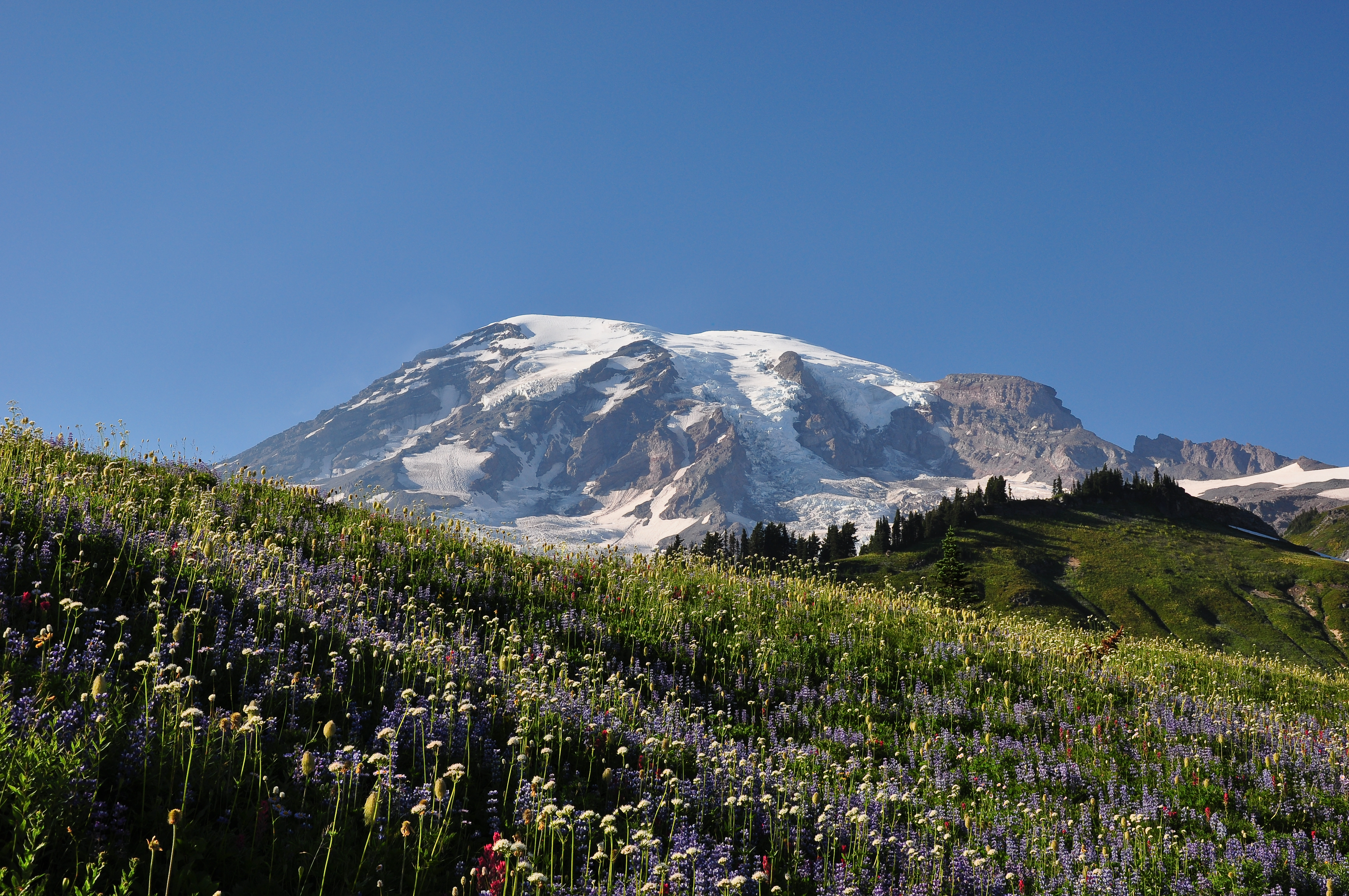 mount rainier asian girl personals Mount rainier in washington is the center of the nation's fifth national park the mountain is 14,410 feet and the tallest volcano in the cascade mountain range.