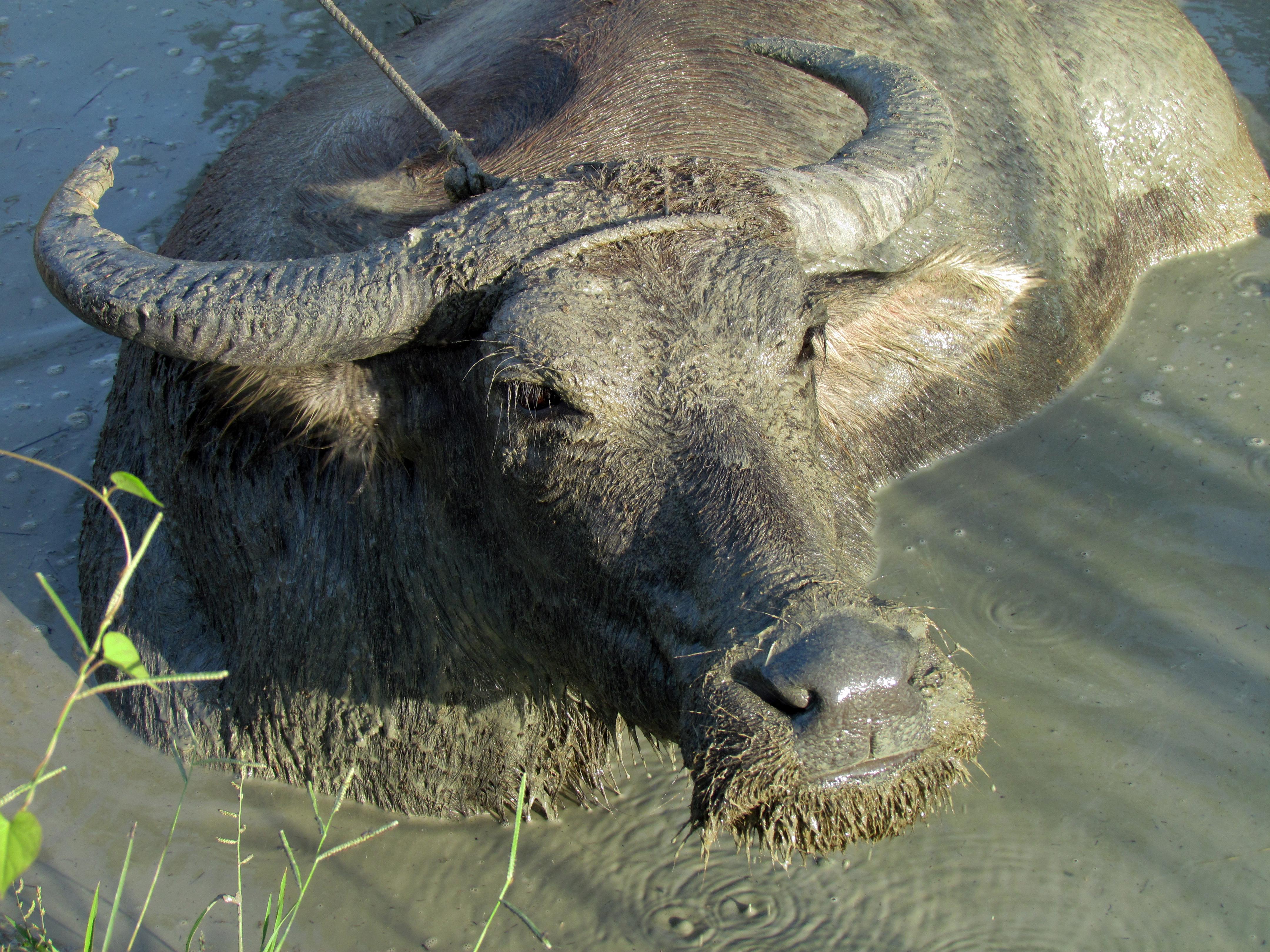 Natural Water Birth Blog