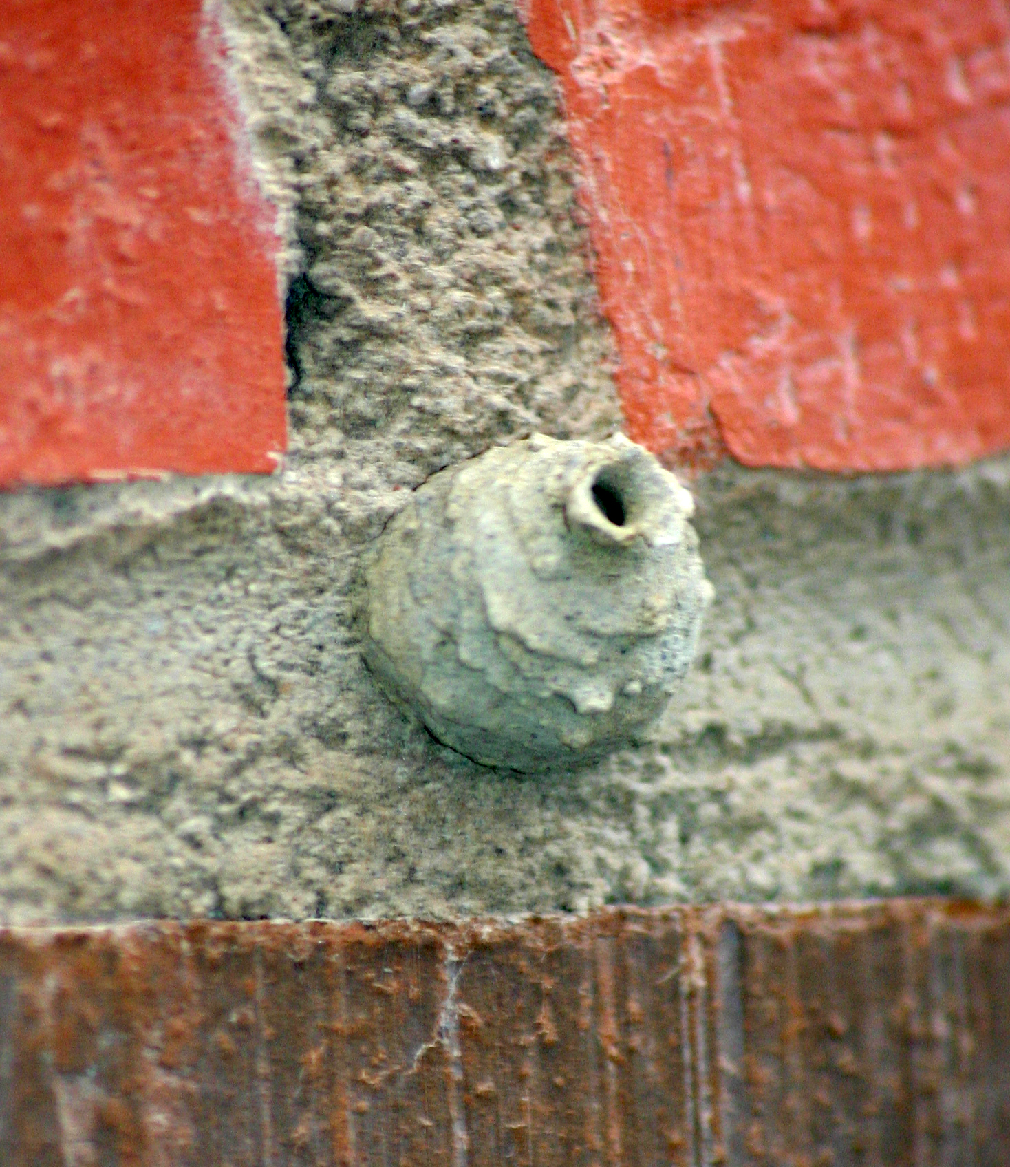 File:Potter wasp nest 6734.jpg - Wikipedia