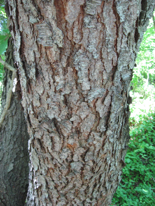 B Tree Identification Trees To Floors