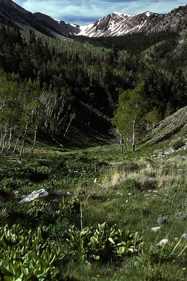 North Schell Peak