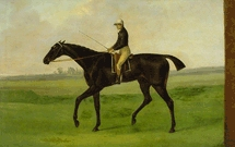 Sir Peter Teazle horse