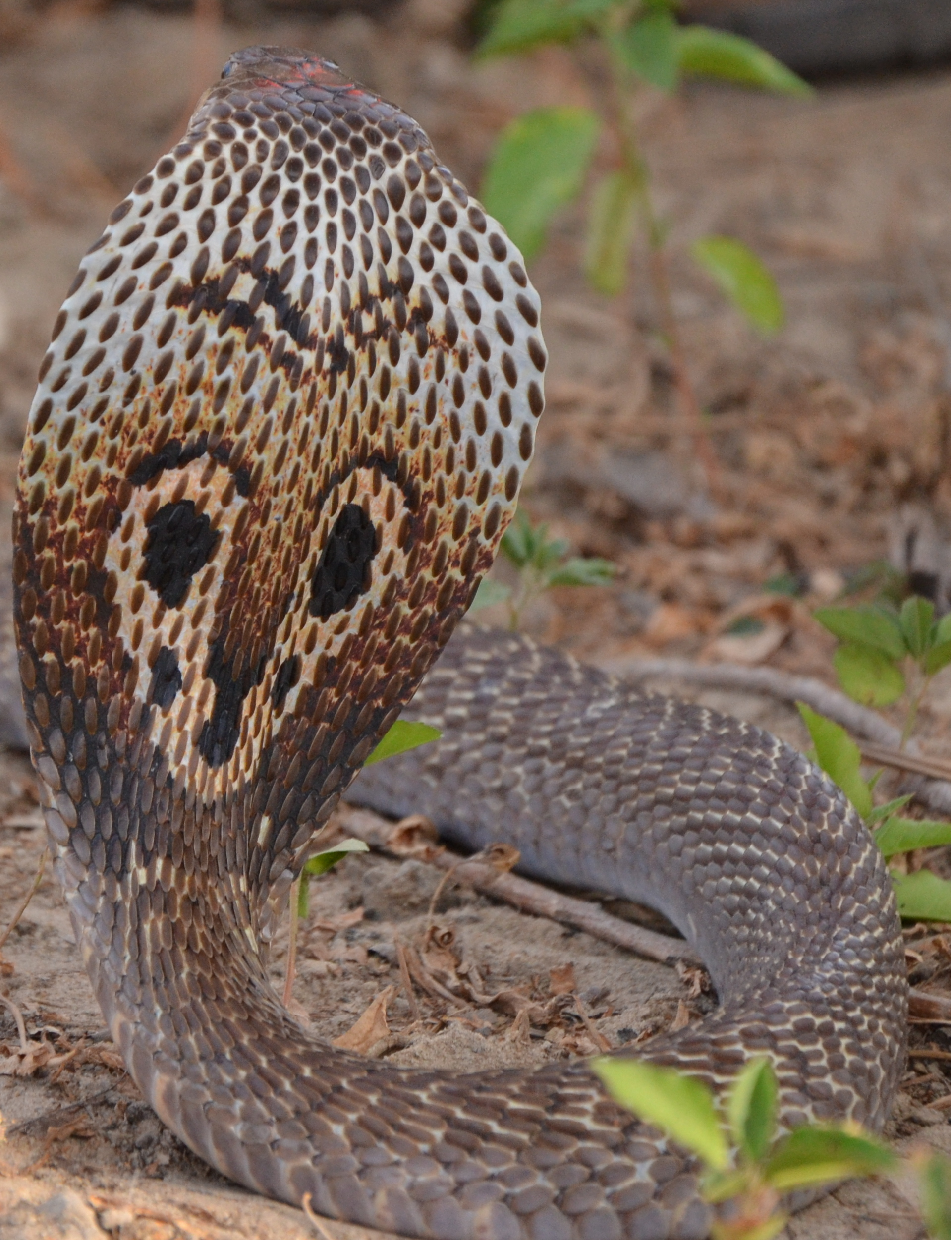 How Do Snakes Get Food