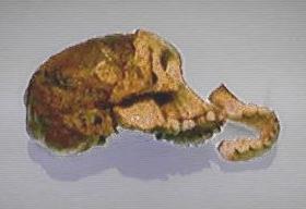 Datiranje evolucije fosila