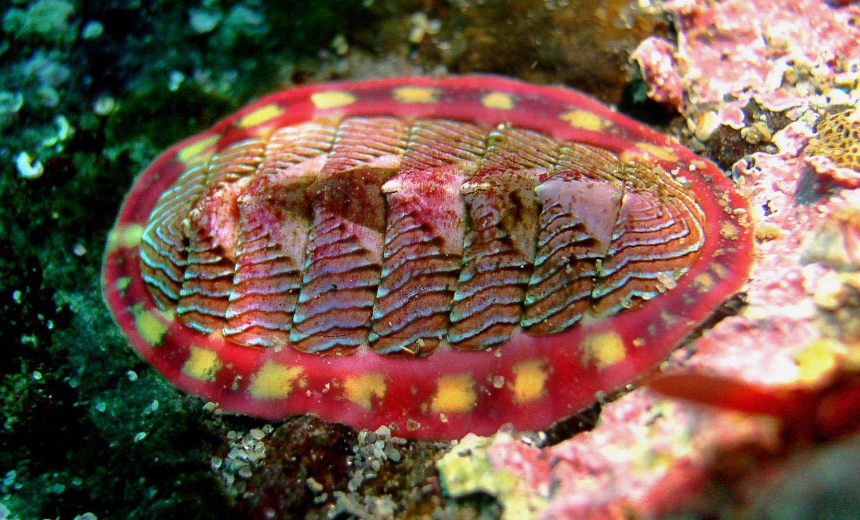 گهواره دریایی
