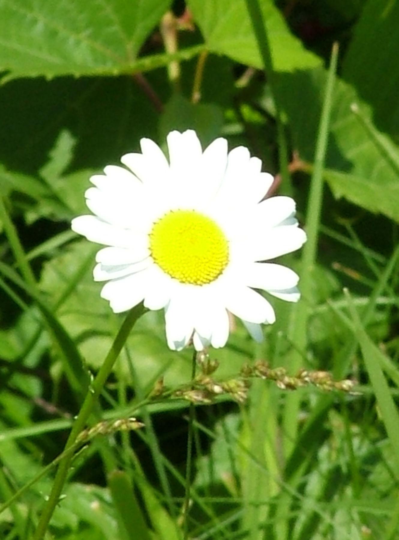 File Wildflower